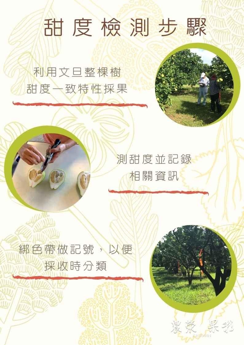 大川果園文旦甜度分級制度步驟圖