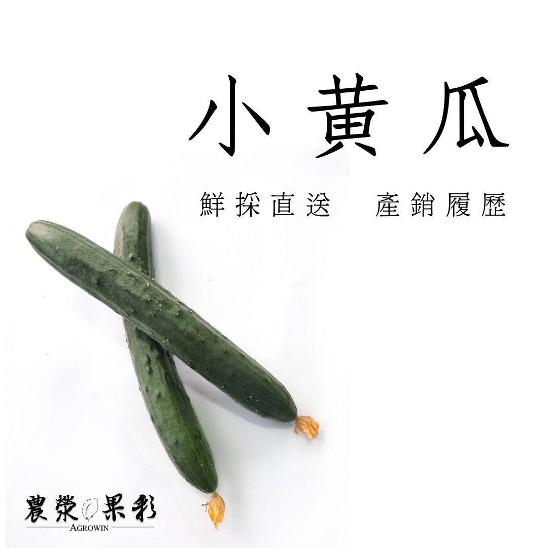 產銷履歷小黃瓜