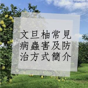 文旦柚常見病蟲害及防治方式簡介