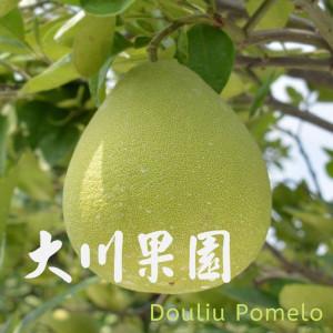 斗六文旦領導品牌-大川果園