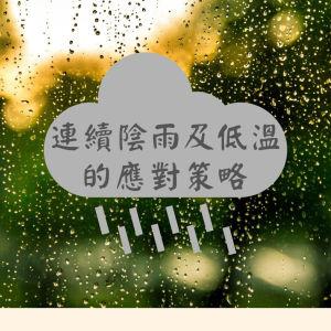 連續陰雨及低溫的文旦應對策略